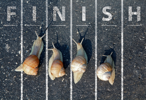 Snails Race to the FInish